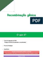 Recombinação gênica.pdf