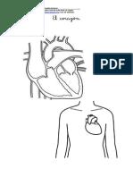 El corazón.pdf