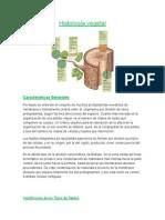 Histología Vegetal