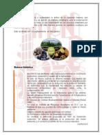 Desarrollo Sustentable, Esbozo Historico