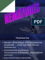 Nematodes 3