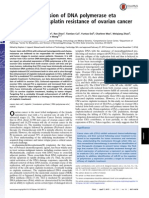 Enhanced Expression of DNA Polymerase Eta