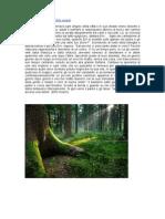 La Foresta Incantata Di Elfo Imlach