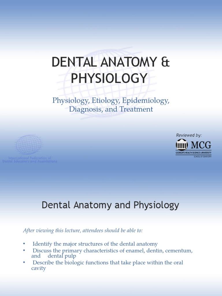Dental Anatomy & Physiology | Human Tooth | Dentin
