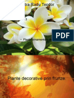 Plante Ornamentale de Interior
