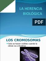 La Herencia Biologica (2)