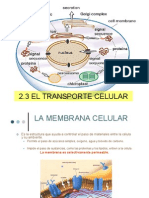 Unidad2 Transporte de La Celula