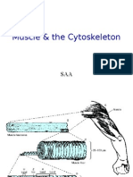 Muscle & the Cytoskeleton_SAA