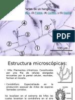 micro.. (3).pptx