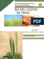 2 Cereales-cultivo Del Trigo