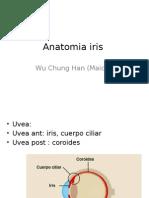 Anatomia Iris