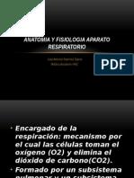 Anatomia y Fisiologia Aparato Respiratorio (2)