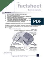 Basic Brain Information