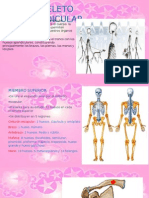 Anatomia Esqueleto Apendicular Ib