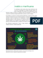 reportaje de la marihuana