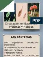 2014130_73059127-2 Circulacion en Bacterias Protistas y Hongos.pptx