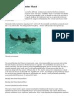 The Big Blackreef water Shark