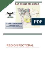 Clase 4 - Region Pectoral y Mama