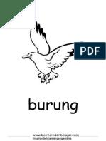 Burung - Mewarnai