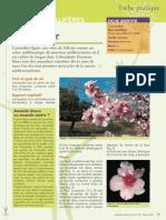 Plantes Melliferes Amandier