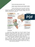Anatomi Dan Vaskularisasi Otak