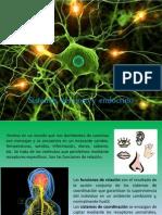 sistema nervioso y endocrino.pdf