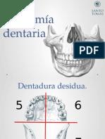 Anatomía Dentaria, Oredenacion, Enmuflado