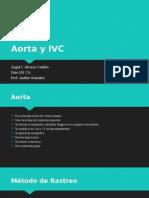 aorta y ivc