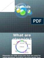 Plasmid 1