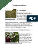 Historia de Mejoramiento de Plantas