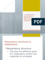 7.2 Respiratory Structures and Breathing Mechanisms in Humans and Animals