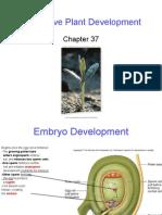 Q'bic Ch. 37 Vegetative Plant Development.ppt
