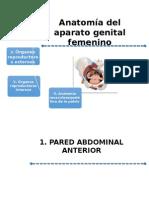Anatomia Aparato Genital Femenino Final