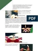 Polinização Artificial