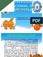 Mandarina Arango Espinoza