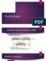 Embriologia del riñon
