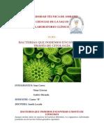 BACTERIAS QUE PODEMOS ENCONTRAR A TRAVES DE CITOLOGÍA.pdf