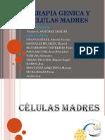 trabajo-de-biologia-celulas-madres-y-terapia-genica.ppt
