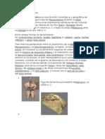 Arte de Mesopotamia.docx