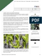 Jardin vertical de plantas hortícolas.pdf