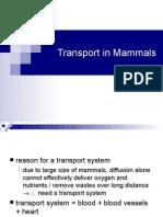 Transport in Mammals