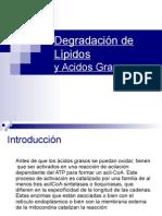 Degradacion d Lipidos y Ac Grasos