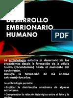 8 Clase 24-06 Embrionario