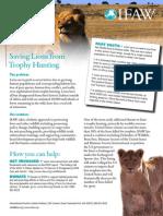 IFAW Lions Fact Sheet