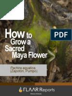 7 Pachira Aquatica Growth Sequence