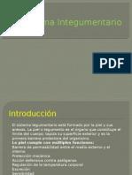 Sistema Integumentario
