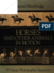 Edweard Muybridge AnimalsinMotion