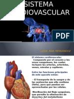 Sistema Cardiovascular Anatomia-1