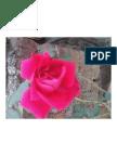 convert-jpg-to-pdf._2015-08-08_09-13-49