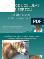 Tumordecelulasdesertoli Rufus 110802112635 Phpapp02